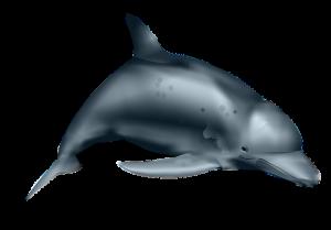 plaatje dolfijn