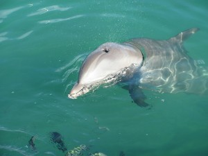 ademende dolfijn