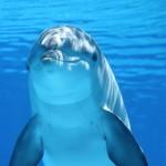 dolfijnenprofielfoto