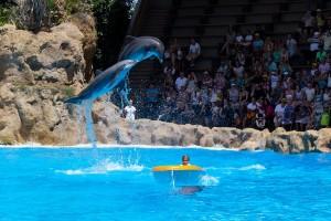 dolfijnenshowdolfinarium